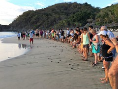 Ixtapa & Zihuatanejo (GregKoller) Tags: ixtapa zihuatanejo lasbrisas mexico tortugas turtles