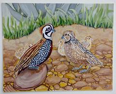Montezuma Quail (M.P.N.texan) Tags: paint painting acrylic acrylics original handpainted bird birds quail montezumaquail texas avian mpnl