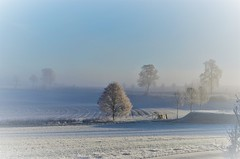 Fog and snow (Tobi_2008) Tags: winter landschaft landscape bäume trees himmel sky hessen deutschland germany allemagne germania sundaylights