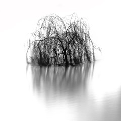 Seine Flooding 2018 (jeffclouet) Tags: nikon nikkor d7100 paris capital europe seine fleuve rio river monochrome nb bw pb harbre arboles tree longexposure reflection reflejo reflet 11 water minimal minimum minimalism flooding innondation crue 2018 inundacion exposure city cuidad ville downtown