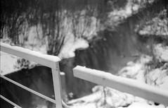 Scan-180114-0011 (Oleg Green (lost)) Tags: nokton 1550 bokeh bessat rangefinder voigtlander film 35mm bw blackandwhite fomapan400 winter country