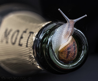 Champagne and Escargot