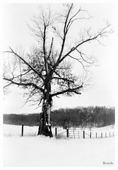 Midwest in Winter (JourneysEnd1750) Tags: d76 bergger pancro400 film analog winter snow weather midwest mediumformat 120film landscape browine kodak six20 boxcamera vintagecamera berggerpancro400