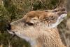 Young White-tailed Deer (johnny4eyes1) Tags: whitetailed bokeh frigid wildlife winter nature whitetaileddeer environment deer