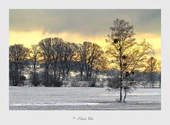 ...in der Glonnebene . (Tauras Caio) Tags: glonn glonntal glonnebene winter bäume schnee winterfarben farben winterlandschaft