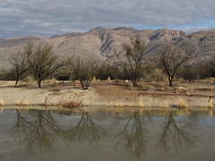 The lower ponds at Agua Caliente Park (Distraction Limited) Tags: roypdrachmanaguacalienteregionalpark aguacalienteregionalpark aguacalientepark aguacalientespring tucson arizona aguacaliente20180219 riparian riparianzone riparianarea riparianhabitat
