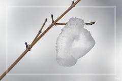 Pendentif éphémère !!!! (thierrymazel) Tags: neige snow macro bokeh pdc dof profondeurdechamp hiver winter