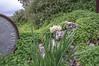 Ψίνθος (Psinthos.Net) Tags: ψίνθοσ psinthos nature countryside φύση εξοχή sky cloudy cloudiness σύννεφα νέφη συννεφιά βαρέλι barrel wildflowers wildflower flowers flower λουλούδια λουλούδι άνθη blossoms whiteblossoms λευκάάνθη άσπραάνθη κίτριναάνθη yellowblossoms narcissus νάρκισσοσ νάρκισσοσοκυπελλοφόροσ τσαμπάκι μυρσίτζια μυρσίτζι βράχοσ πέτρα stone rock shrub θάμνοσ θάμνοι κλαδιά branches shrubs greens χόρτα οξαλίδεσ sorrels ξυνιέσ ξυνάκια ξινάκια κίτριναλουλούδια yellowflowers fasouli φασούλι fasuli γύρη pollen απόγευμα απόγευμαχειμώνα afternoon january ιανουάριοσ γενάρησ χειμωνιάτικοαπόγευμα χειμώνασ winter