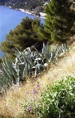 Ventimiglia, Zeiss Ikon Colora + K. Colorplus 200 (paolapaoletta) Tags: zeissikoncolora kodakcolorplus200 film selfdeveloped nature natura costa coast ventimiglia liguria italy