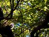 (polianaamaral) Tags: folhas galhos tronco nikon andré santo azul céu verde arvóre embaixo natureza verão