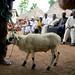 NTD activities in Faranah, Guinea