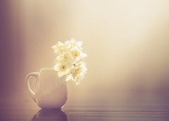 Almost white (Ro Cafe) Tags: daffodils lifeisarainbow stilllife flower white backlight naturallight soft softness simple colors softfocus softlight nikkormicro105f28 nikond600 textured