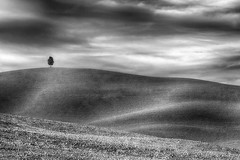 Solitudine (daniele romagnoli - Tanks for 23 million views) Tags: siena bw paesaggio landscape cielo sky toscana italia italy romagnolidaniele tuscany autunno luce light
