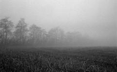 The border (Rosenthal Photography) Tags: dezember nebel herbst bnw schwarzweiss anderlingen 35mm natur bäume asa400 20171202 ff135 winter pflanzen feld städte landschaft ilfordhp5 bw olympus35rd analog rodinal150 dörfer siedlungen landscape autumn december mood fog mist nature fields olympus olympus35 blackandwhite 35rd fzuiko zuiko 40mm f17 ilford hp5 hp5plus rodinal 150 epson v800