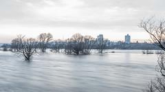 Am Strom (lars_uhlig) Tags: 2018 bonn deutschland germany rheinland rhein rhine abend evening fluss river wasser hochwasser flood flooding winter bäume trees dämmerung dawn