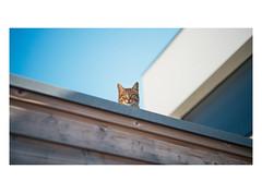 X-Cat (Roxo15) Tags: vsco df blagnac 2017 nikon lieux nikondf zenit cat zenithelios44mf2 cadre frame animaux chat