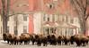 Street Gang in Mammoth Wyoming (Kim Tashjian) Tags: bison buffalo wildlife mammoth wyoming yellowstonenationalpark winter