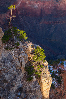 cliffside tree at the canyon