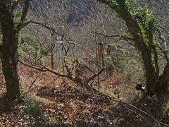 Recording wind chimes high up in Teign Gorge (Philip_Goddard) Tags: europe unitedkingdom britain british britishisles greatbritain uk england southwestengland devon dartmoornationalpark drewsteignton teignvalley teigngorge hunterspath huntinggate recording windchimes davisblanchard bamboo