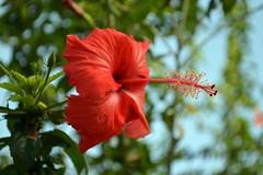 WOL Calauan Laguna Philippines Day 1 (62) (Beadmanhere) Tags: philippines flowers