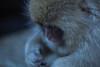 Profile (moaan) Tags: yamanouchi nagano japan jp monkey japanesemacaque babysnowmonkey livinginthesnow cold chill endure dof depthoffield bokeh bokehphotography canoneosrdmarkiii zeissmakroplanart2100ze 100mm f20 utata 2018 makroplanart2100
