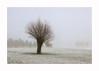 January Willow - Fuji Provia 400x (magnus.joensson) Tags: sweden swedish skåne beddingestrand january foggy fog snow willow tree nikon nikonfe nikkor 35105afd handheld fuji provia 400x e6 24x36