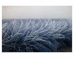 (bruXella & bruXellus) Tags: icedgrass ostende oostende ostend belgique belgië belgien belgium