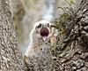 Wake Up little baby (dina j) Tags: floridawildlife floridabird florida wildlife bird owl greathornedowl babyowl owlet babyanimal tampabay birdofprey