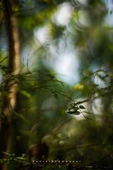 Breeze (Daniela Romanesi) Tags: 2576 forest floresta árvore tree folhas leaf leaves folhagem jardim arpuro arfresco breeze herbal natural nature carlzeiss 50mmf14 planar sony a7rii zeissplanart1450