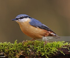 Nuthatch (Gary Chalker, Thanks for over 3,000,000. views) Tags: nuthatch bird pentax pentaxk3ii k3ii pentaxfa600mmf4edif fa600mmf4edif fa600mm 600mm