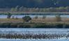 Dixon_JB_061_3221 (Joanne Bouknight) Tags: dixonwaterfowlrefuge illinois observationtower thewetlandsinstitute viewfromobservationtower whitepelican