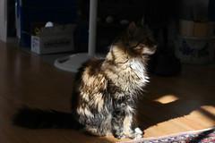 IMG_0207 (Dan Correia) Tags: marthasvineyard island mvhouse shadows cat heidi canonef50mmf18 15fav addme200 topv555 topv777 topv999