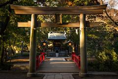 Small shrine and sunbeams (tokyobogue) Tags: japan saitama omiya nikon nikond7100 d7100 sigma sigma1750mmexdcoshsm hikawajinja omiyahikawajinja hikawashrine omiyahikawashrine shrine jinja torii gate bridge red trees pond water sunset sunbeams