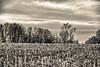 Winterscene (enneafive) Tags: hesbania winter field bucolic trees clouds sky fujifilm xt2 monochrome filmsimulation