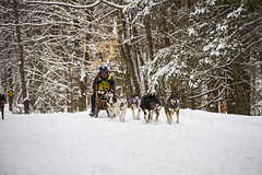 Tug Hill Challenge Dog Sled Races - 2018 (Matt Champlin) Tags: dog doggos doggies sled winter sledding sleds tug tughillchallenge 2018 canon fun outdoors adventure cny newyork upstatenewyork life nature woods woodland run race racing huskies