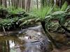 The Redwoods Otway ranges (babrey-au) Tags: theredwoods otways otwayranges apollobay beechforest fern victoria australia canon