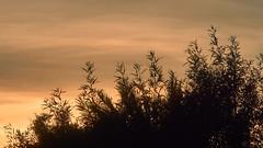 2018-01-13 17-18-44_018b_Canon FL 135mm f2.5 (wNG555) Tags: 2018 arizona phoenix clouds sunset canonfl135mmf25 fav25
