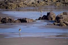 Playa Brava (anitareal) Tags: playa orilla costa mar rocas aves airelibre celeste naturaleza norte foto reflejos personal travel destino luz sombras nikon anamariareal