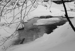 Pas perdus (bd168) Tags: neige hiver snow winter water thaw fonte pas tracks