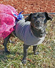 Mia 2  (15) (AbbyB.) Tags: dog canine shelter pet rescue adopt dachshund mtpleasantanimalshelter easthanovernj newjersey shelterpet petphotography