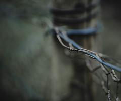 wired... (Jess Feldon) Tags: fence fencefriday dof depth bokeh jessfeldon tetbury wires fencepost lookslikefilm blur