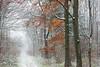 Winterwald (S. Kemkes) Tags: trees tree winter schnee wald laub orange weg bäume duisburg niederrhein forest nrw