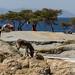 IMG_5571 Shala lake, Ethiopia
