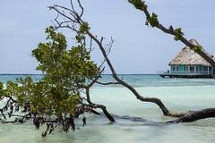 IMG_3626 (CandiceLobo) Tags: belize belizeandreams beach besttimes honeymoon travel tropical adventure happyplace beautiful ocean blue green nature getaway