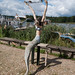 Beach log mermaid