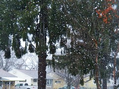 Nor'easter Friday (MissyPenny) Tags: noreaster march pennsylvania tree snow rain wind buckscounty northeast usa