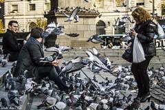Pigeons in Plaza de Cataluña - Palomas en Plaza de Cataluña, Barcelona (RobertoHerreroT) Tags: birds pigeon paloma pigeons robertoherrerotardon barcelona cataluña catalunya plazadecataluña canon1100d canonista travel traveller photo photography