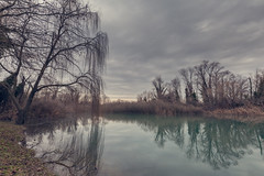 Creek of a river with light haze and weeping willow under a leaden sky. (franco nadalin) Tags: clouds fog lake nature pond reeds reflection river trees water weepingwillow abigfave
