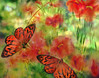 Red Butterflies (el-liza) Tags: nature outdoor outside flora plant flowers garden summer butterflies red green colourful vibrant vivid friends motyle kwiaty