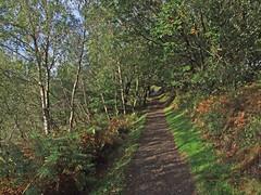 Autumn in Teign Gorge, from Hunter's Path passing through copse (Philip_Goddard) Tags: europe unitedkingdom britain british britishisles greatbritain uk england southwestengland devon dartmoornationalpark drewsteignton teignvalley teigngorge hunterspath views scenery landscapes valley hill woodland wood autumn bracken